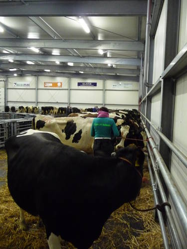 cattle_market_purmerend2009