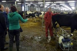 cull_cows1_2009
