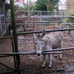 donkey1_2009