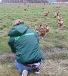 hens_belgium_2009