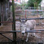donkey_2009