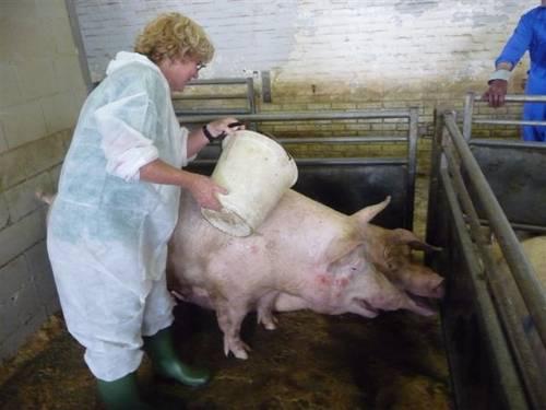 pig_station