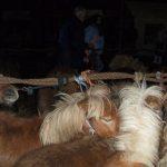 hedel_horsemarket