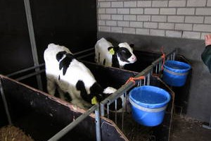 25.02.2011 Visit of an organic Dairy Farm