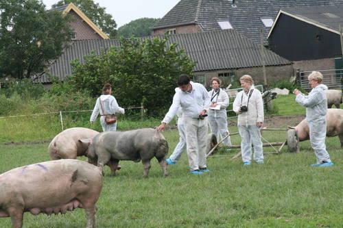 pig_course1