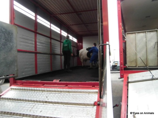 14.06.2012_Leeuwarden_helping_with_loading_gently