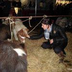 05.11.2012_hedel_verkeerd_aangebonden_pony