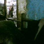 Hadimkoy_slaughterhouse.jpg