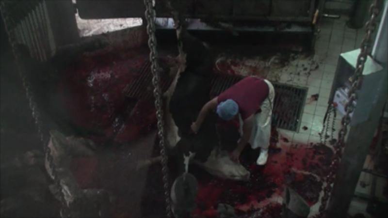 Turkey_slaughterhouses_blured