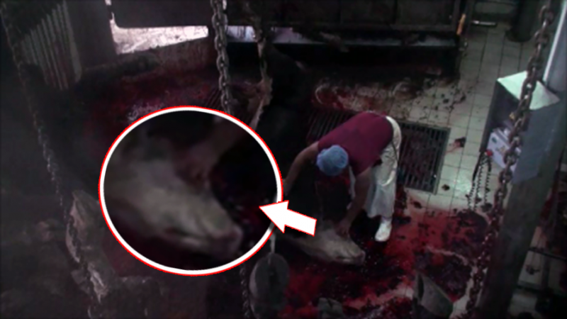 Color_Turkey_slaughterhouses_NEW_with_borderline