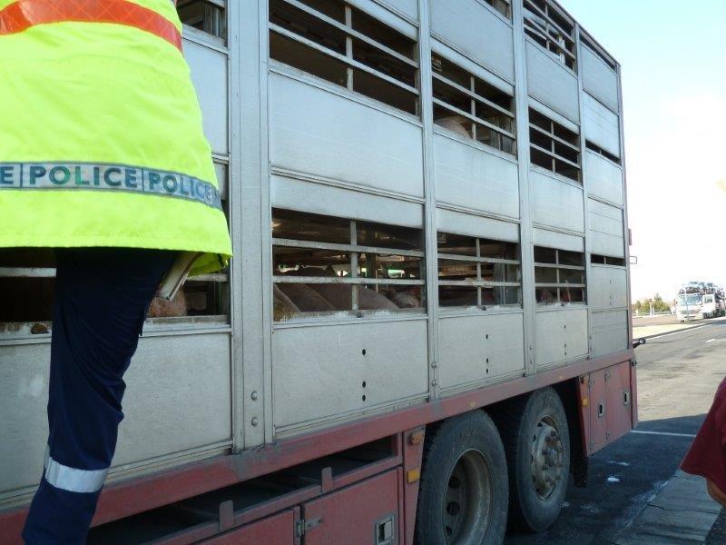 20.01.14_TD_HU_25_MND_849_freeway_M5_Balastya_Highway_police_policeman_checking_the_animals_3