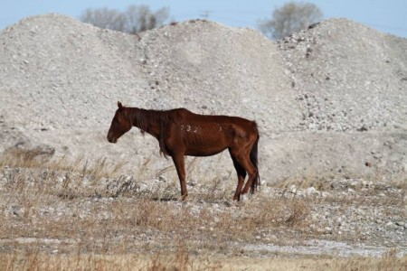 17.10.2012_CH.SG.03_emaciated horse_pasture Bouvry_CAN (2)-001