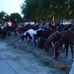11.08.2014_NL_Bemmel_paardenmarkt (9)
