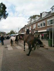 01.09.2014_Horsemarket_Elst(19)