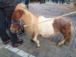 01.09.2014_Horsemarket_deformed_legs