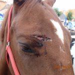 23.09.2014_NL_Roden_injured_head