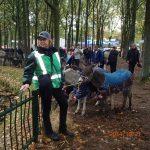 29.10.2014_horse_market