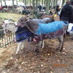 21-10-2014-donkey-w-blankets-zuidlaren-market