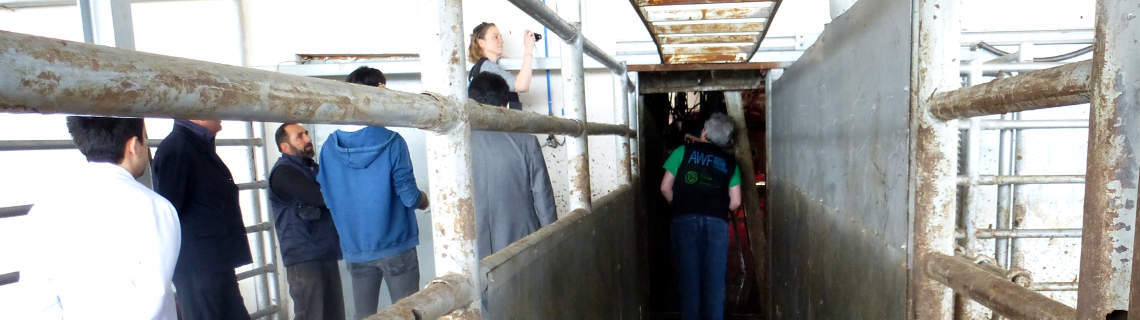 We are making design-improvements to slaughterhouses in Turkey