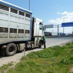 Truck at turkish border