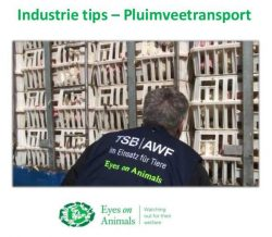 Industy Tips Pluimveetransport PDF