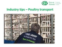 Industy Tips Poultry Transport - Eyes on Animals
