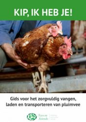 Chicking catching brochure 2016