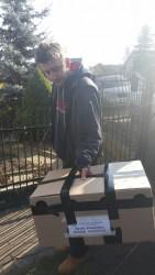 Hens in cardboard box