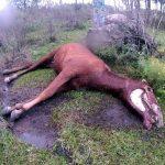 September 2014_Dead mare (2)