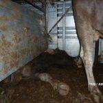 Stucked bull under bad divider