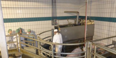 24.10.2016 Several animal welfare improvements in the slaughterhouse of Thönes Natur