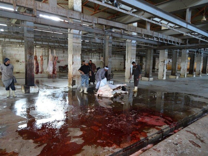 animal slaughter Warning: some of the following graphic photos may distress the reader people for the ethical treatment of animals (peta) is.
