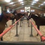 Horsemarket Barneveld