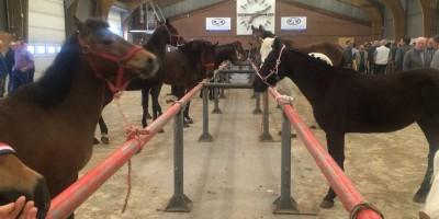 09.05.2016 Inspection horse Barneveld, NL