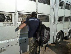 Inspecting trucks