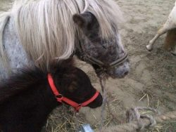Mare with foal on the market