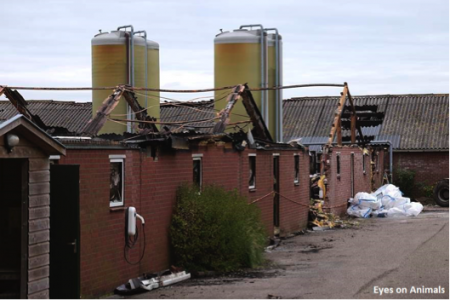 10.07.2016 Visit of Dutch poultry farm that burned down