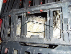 Broken crate