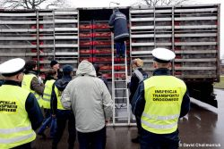 Inspection of poultry transport