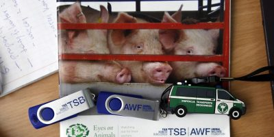 16.11.2016 Training of Road Police and Veterinarians, Gdansk (Poland) – Theory part