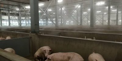 20.12.2016 Visit to new slaughterhouse Westfort
