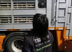 Inspection pig transporter