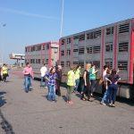 Vet Inspection - Katowice training