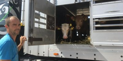 29.06.2017 Day 4 Inspection of EU cattle trucks at the Turkish border