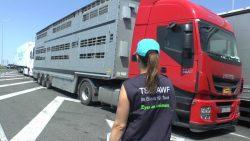 Checking of livestock trucks