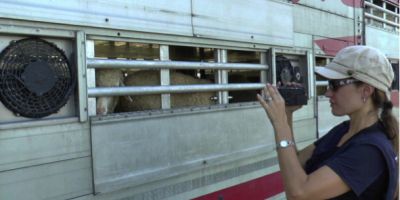 15.08.2017 Inspection of livestock trucks at BG-TR border, Kapitan Andreevo