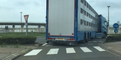 23.08.2017 Trailing of Dutch truck with sheep destined for ritual slaughter at Muslim festival in Belgium