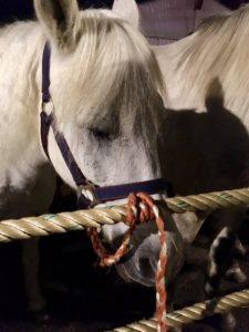 06.10.2017 Inspection of horsemarket in Hedel, NL