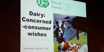 15.11.2017 Eyes on Animals guest speaker at Lely conference for dairy farmers from around the world