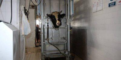 18.12.2017 Inspection of Tekirdag slaughterhouse, Turkey